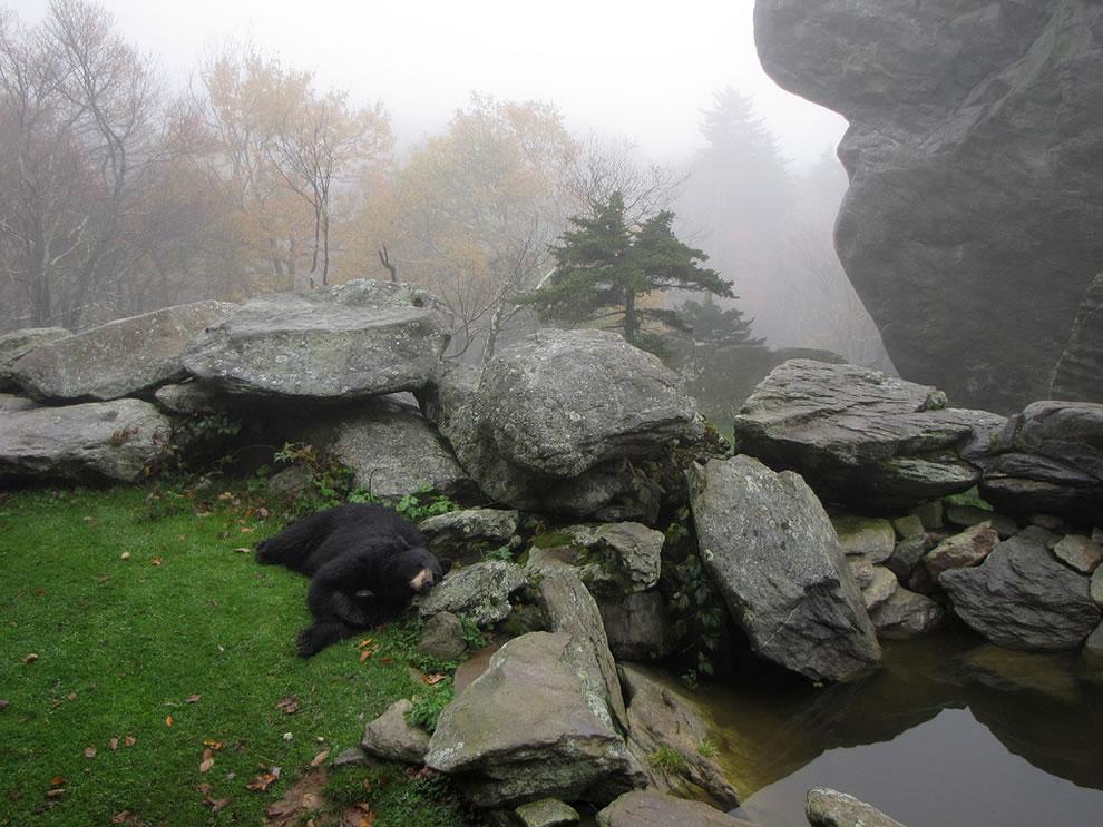 Black-bear-habitat-on-Grandfather-Mountain